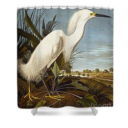 Snowy Heron Or White Egret Shower Curtain by John James Audubon