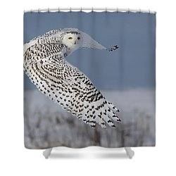 Snowy In Action Shower Curtain by Mircea Costina Photography