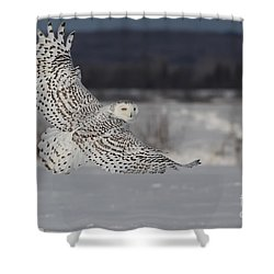 Snowy Owl In Flight Shower Curtain by Mircea Costina Photography