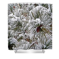 Snowy Pine Needles Shower Curtain by Aimee L Maher Photography and Art Visit ALMGallerydotcom