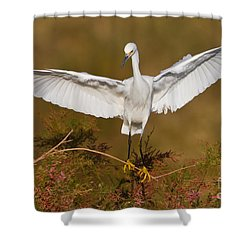 Snowy Wingspread Shower Curtain by Bryan Keil