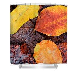 So Cal Autumn Shower Curtain by Heidi Smith