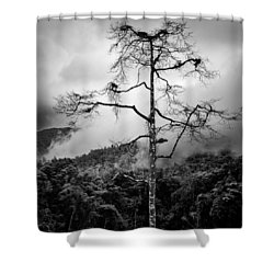 Solitary Tree Shower Curtain by Dave Bowman
