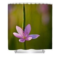 Solo Crocus Shower Curtain by Mike Reid