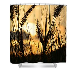 Solstice Shower Curtain by Laura Fasulo