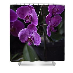 Some Very Beautiful Purple Colored Orchid Flowers Inside The Jurong Bird Park Shower Curtain by Ashish Agarwal
