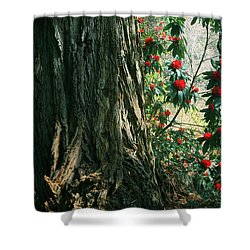 Sometimes Life Is Sweet Shower Curtain by Laurie Search