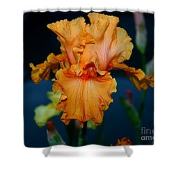 Soprano Iris Shower Curtain by Patrick Witz