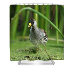Sora Motion Portrait Shower Curtain by James Peterson