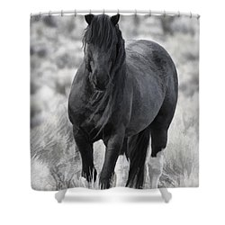 Sox D8749 Shower Curtain by Wes and Dotty Weber