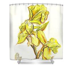 Spanish Irises Shower Curtain by Kip DeVore