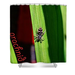 Spider On Green Leaf Shower Curtain by Toppart Sweden