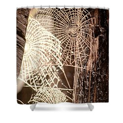 Spider Webs Shower Curtain by Anonymous