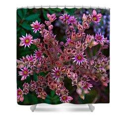 Spiky Flowers Shower Curtain by Omaste Witkowski