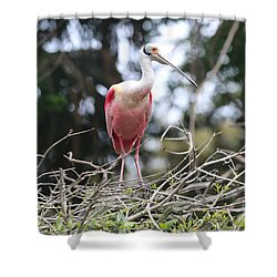 Spoonbill In The Branches Shower Curtain by Carol Groenen