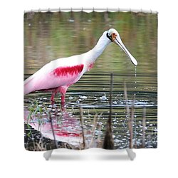 Spoonbill In The Pond Shower Curtain by Carol Groenen