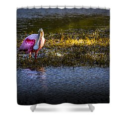 Spotlight Shower Curtain by Marvin Spates