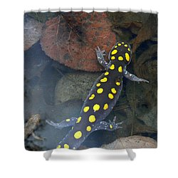 Spotted Salamander Shower Curtain by Christina Rollo