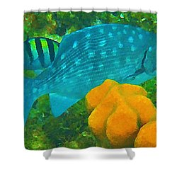 Spotted Surgeon Fish Shower Curtain by John Malone
