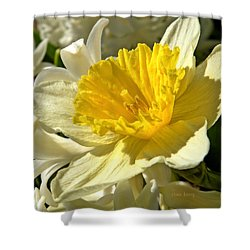 Spring Bloomers Shower Curtain by Chris Berry