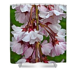 Spring Blossom Shower Curtain by Frozen in Time Fine Art Photography