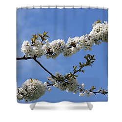 Spring Blossoms 6 Shower Curtain by Carol Lynch