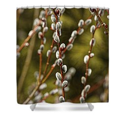 Spring Is Springing Shower Curtain by Thomas Young
