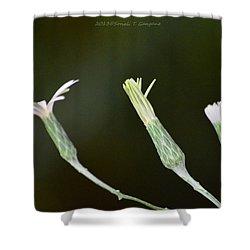 Spring Phase Shower Curtain by Sonali Gangane