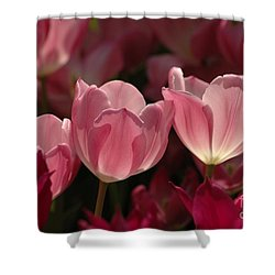 Spring Tulips Shower Curtain by Kathleen Struckle