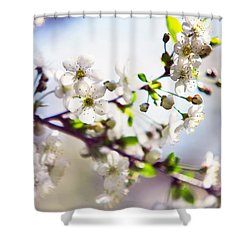 Spring White Cherry Tree  Shower Curtain by Jenny Rainbow