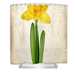 Spring Yellow Daffodil Shower Curtain by Elena Elisseeva