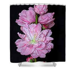 Spring's Arrival  Shower Curtain by Heidi Smith