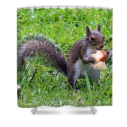 Squirrel Eats Mushroom Shower Curtain by Kim Pate