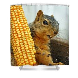 Squirrel Shower Curtain by Lori Tordsen