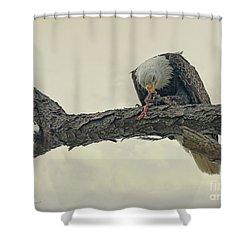 Squirrel Lunch Shower Curtain by Deborah Benoit