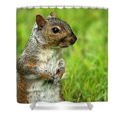Squirrel Pose Shower Curtain by Karol Livote