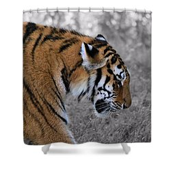 Stalking Tiger Shower Curtain by Dan Sproul