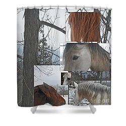 Stallions Collage There Is A Connection Shower Curtain by Patricia Keller