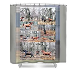 Stallions Enjoy Some Horsing Around Shower Curtain by Patricia Keller