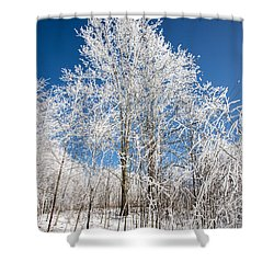 Stand Tall Shower Curtain by John Haldane