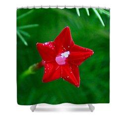 Star Glory Shower Curtain by Kim Pate