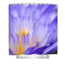 Star Of Siam Waterlily Shower Curtain by Priya Ghose