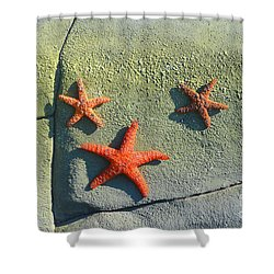 Starfish On The Rocks Shower Curtain by Luther   Fine Art