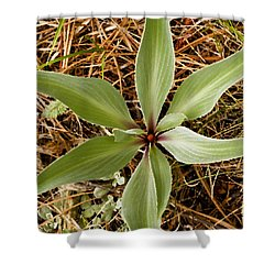 Starfish Plant Shower Curtain by Rich Franco