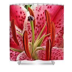 Stargazer Lily Shower Curtain by Mariola Bitner