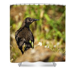 Starling Shower Curtain by Guido Montanes Castillo