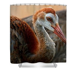 Staying Close To Mom Shower Curtain by Carol Groenen