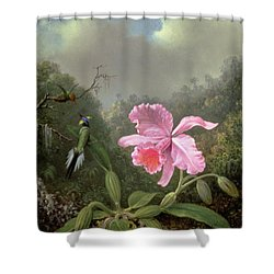 Still Life With An Orchid And A Pair Of Hummingbirds Shower Curtain by Martin Johnson Heade