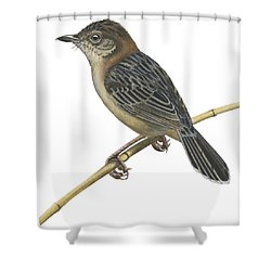 Stout Cisticola Shower Curtain by Anonymous