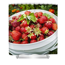 Strawberry Harvest Shower Curtain by Elena Elisseeva